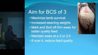 Ewe Body Condition Scoring  with Lorna Gibson
