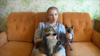 В каждом доме должна быть кошка !!