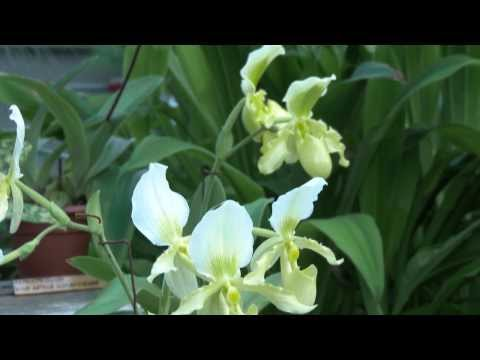 Orchids Exhibition in Tallinn Botanic Garden. Shot in 4K.