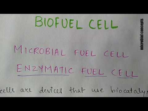 Biofuel cell (2): enzymatic fuel cell or what is enzymatic fuel cell?