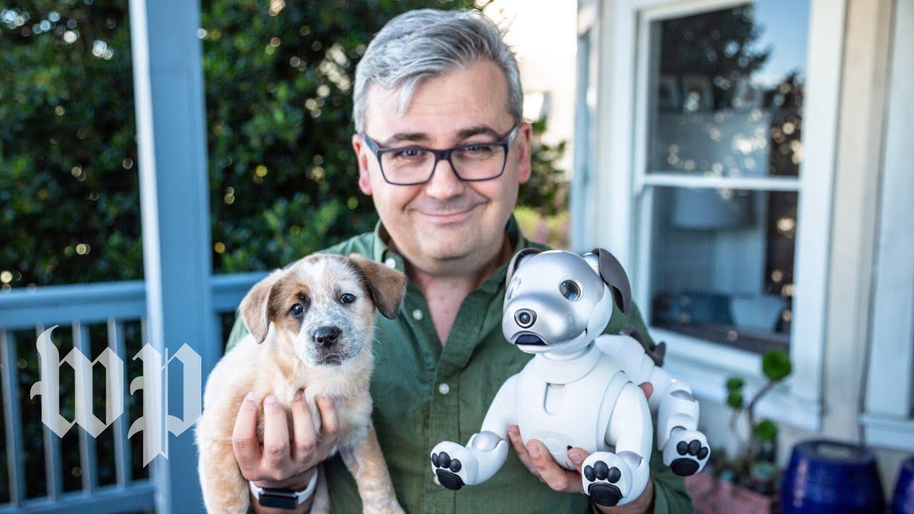 Sony's robot dog Aibo vs  a real puppy