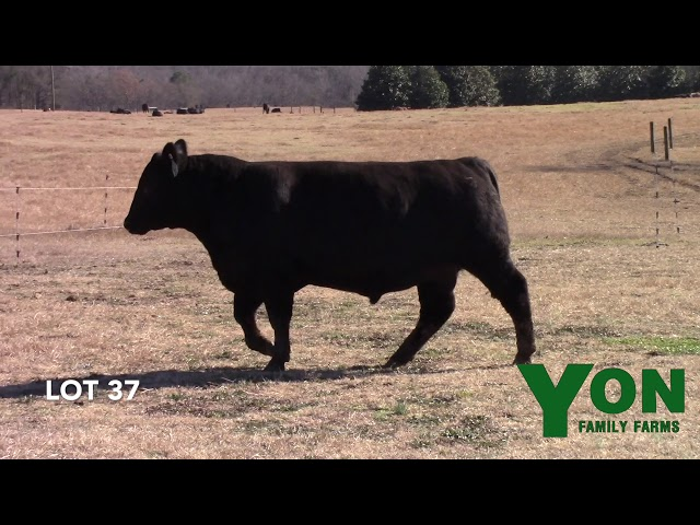 Yon Family Farms Lot 37