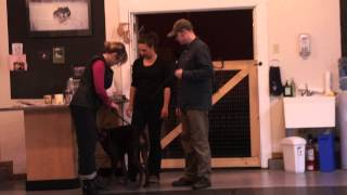Dog Training Victoria Bc Doberman