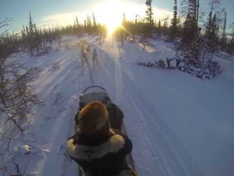 Dog sledding in the Arctic at Churchill Manitoba, Canada      #2 of 2