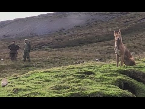 Ferreting on the moorland of North Yorkshire | Shooting Times