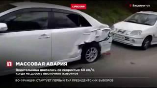 Во Владивостоке столкнулись 11 автомобилей из за кошки, переходившей дорогу