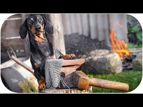 I'll do it myself! Funny dachshund dog video!
