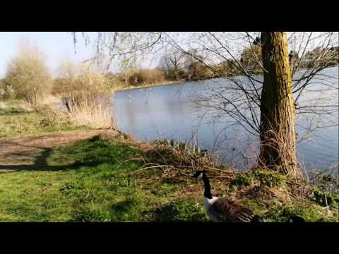 Walrow Ponds Somerset