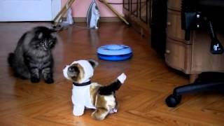 Кошка VS интерактивная собака
