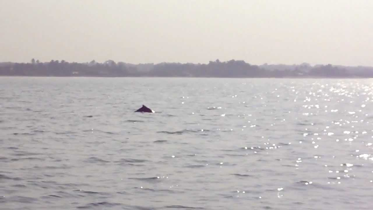 Dolphins And Sunset At Karwar Beach