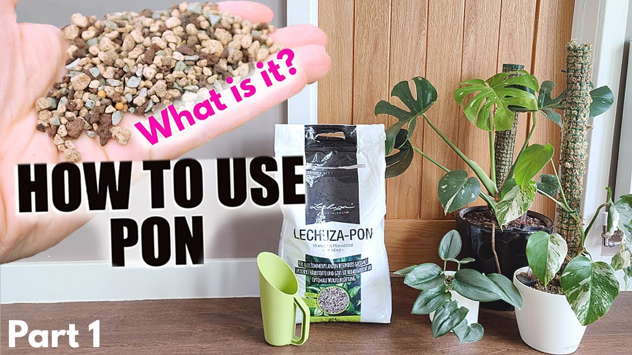 Download How to use Lechuza PON part 1 - What is PON - Convert plants to soil free - Get rid of fly gnats