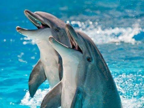 Prirodni Radio - Dolphins