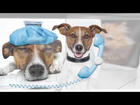 Plano de Saúde Pet - Mundo Cane - Health for Pet