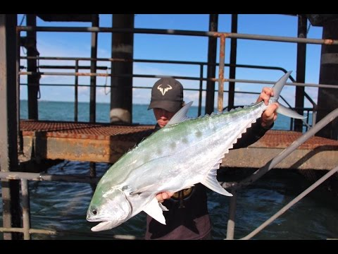 Land Based Queenfish In Darwin Nt 2017