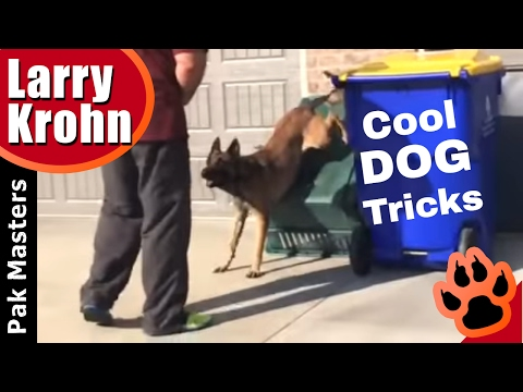 How to teach a dog cool tricks / Dog Hand Stand Tutorial 🔹 Clicker Training