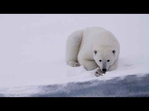 Spitsbergen: The Wildlife Capital of the Arctic