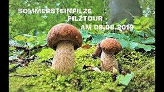 Sommersteinpilze - Große Pilztour am 09.08.19   Boletus astivalis - Grande tour del 09.08.2019