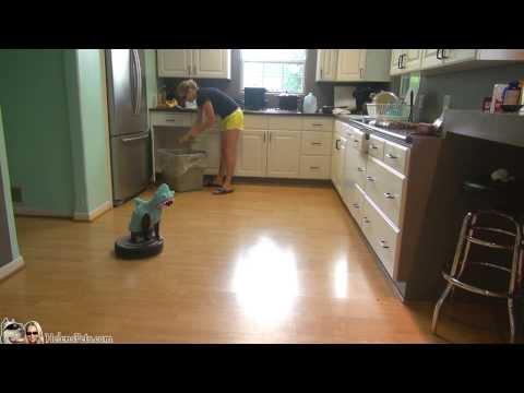 Katze im Haikostüm fährt durch die Küche
