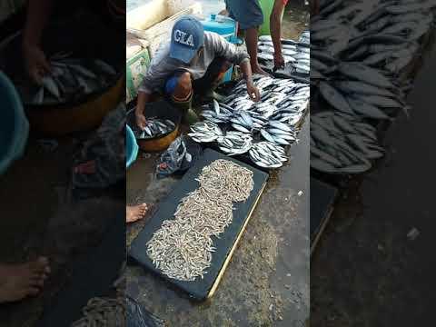 Pasar Ikan Segar Hamadi Jayapura..