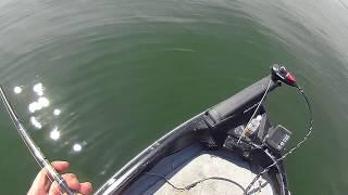 久しぶりの琵琶湖は、例年に比較してウィードの少ない状況でした。 釣果...