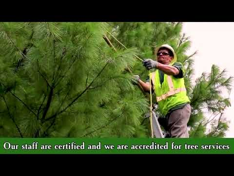 Harder Services Inc Tree Removal I Tree Pruning Services Nassau County Ny