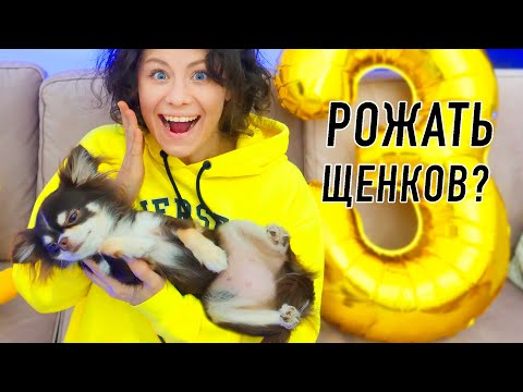 У Юми не будет щенков! 10 фактов о моей собаке! День Рождения собаки Юми Чу