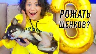 Юми беременна Будут щенки 10 фактов о моеи собаке и ее реакция День Рождения собаки Юми Чу