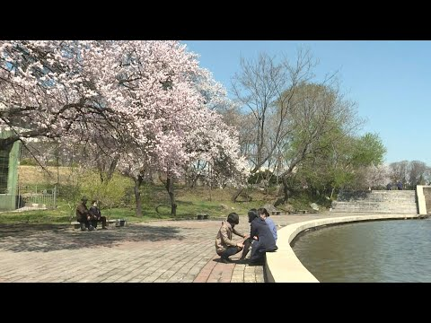 North Koreans enjoy park in sunny Pyongyang   AFP
