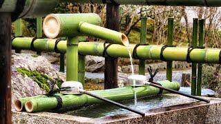 Bamboo forest, Tenryū-ji & Golden temple - Kyoto - Japan - 竹林、天龍寺&ゴールデン寺 - 嵐山/嵯峨野 - 京都 - 日本