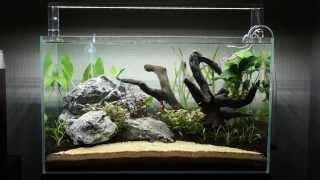 Planted Aquarium - The Beach