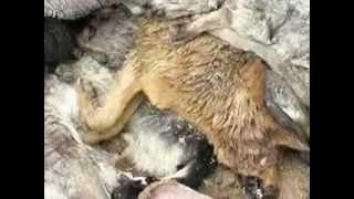 В Донецке зверски убивают собак