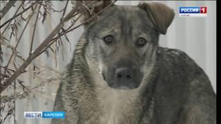 Безнадзорных животных будут чипировать в Петрозаводске