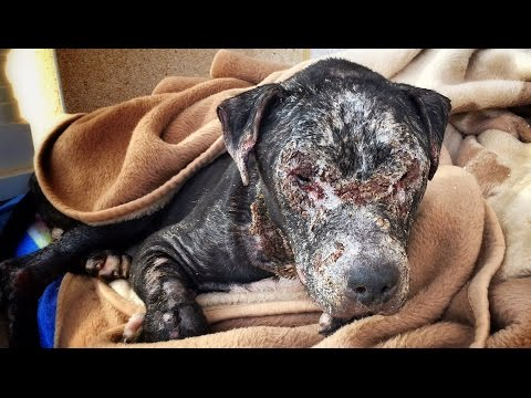 Dog locked in a room and left to die slowly is rescued and fights for his life