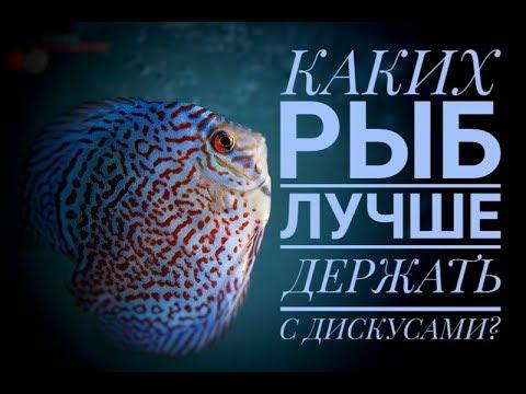 Дискусы. Каких рыб лучше держать с дискусами? Идеальный состав. Видео о коллекции.