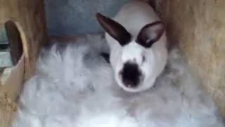 Крольчиха съела крольчат
