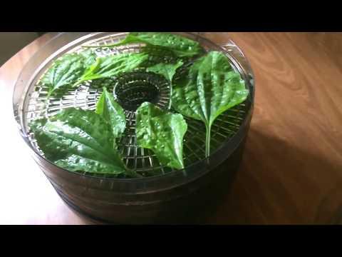 DIY Making Plantain