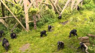 Student Resource - Chimpanzee behaviour for learning or teaching 'group scan sampling'