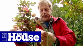 How To Protect Plants For The Winter - This Old House