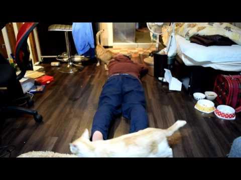 飼い猫の前で死んだふりをしてみたその2(没バージョン)