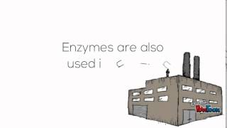 Enzymes and their use in industry - National 4