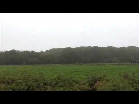 Cheshire Hounds Hunt