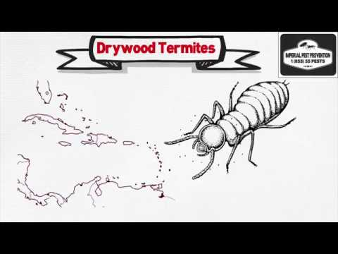 What is the Difference between Drywood termites and Subterranean termites?