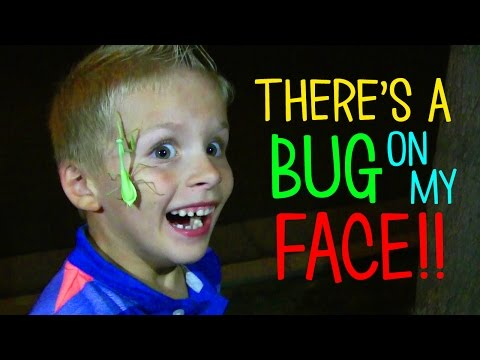 there-is-a-bug-on-my-face!!!
