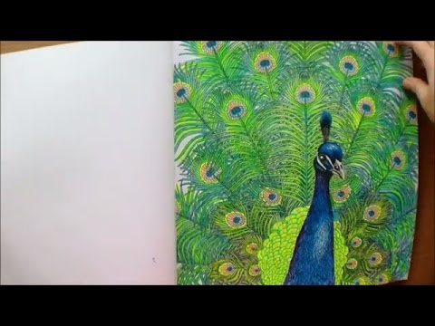 The Aviary by Richard Merritt and Claire Scully Colouring Book Flipthrough