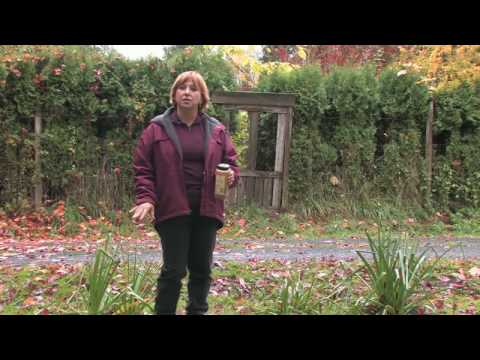 Garden Maintenance : How To Repel Rodents Naturally From Digging Holes In Yard