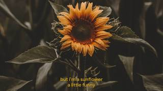 Sunflower - Sierra Burgess (Sierra Burgess Is A Loser) Lyrics thumbnail