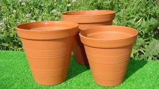 видео Что необходимо учесть при покупке комнатного растения
