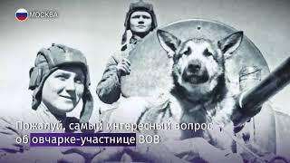 В Госдуме написали тест по истории Великой Отечественной войны