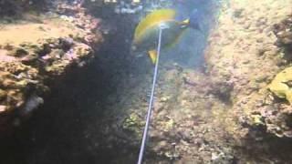 "Dive Hawaii Spearfishing  ""Labor Day Weekend"""