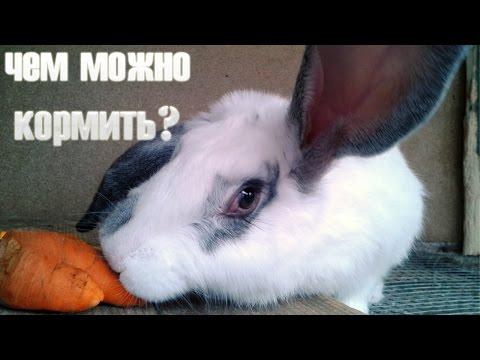 Как кормить кроликов в домашних условиях